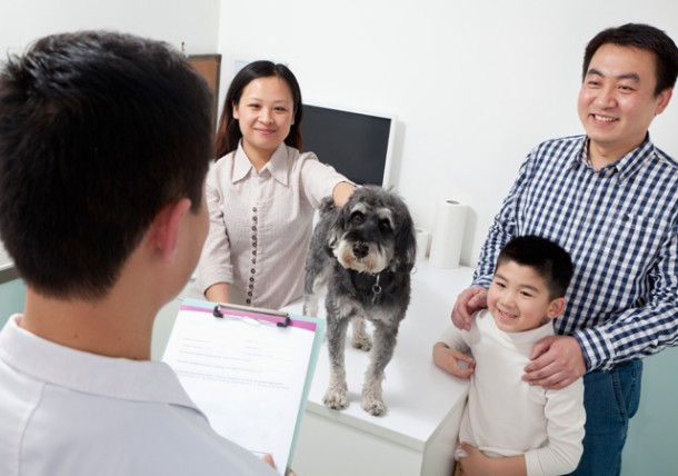 communicating with your veterinarian texas vets texvetpets