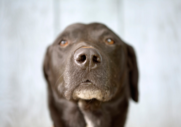 Alzheimer S In Dogs Canine Cognitive Dysfunction Syndrome Texvetpets