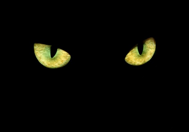Can Cats See In The Dark How Cats Eyes Work Texvetpets