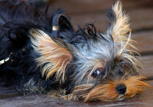 Everything You Need To Know About Pneumonia Texas Pet Health