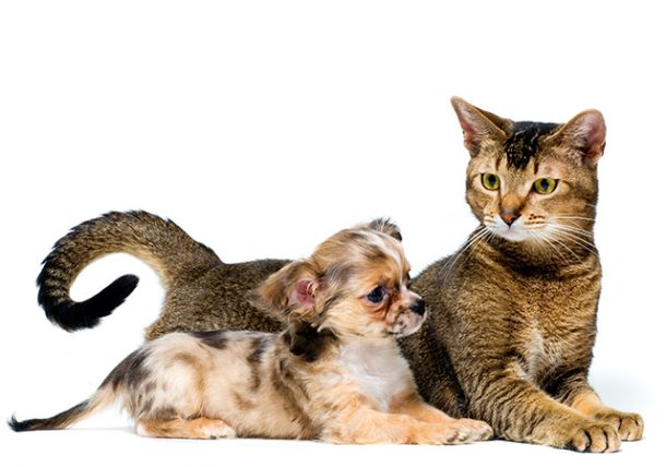 Intestinal Parasites In Cats And Dogs Texas Pet Health Texvetpets