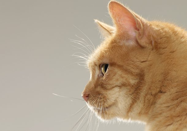 Can Cats Pass Feline Leukemia To Dogs